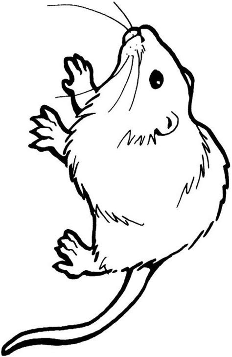 coloring pages for rat free coloring pages of rat