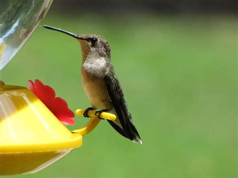 sheris healing flower garden july s new baby hummingbirds