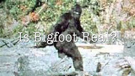 Is This The Real real bigfoot sightings www pixshark images