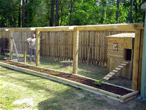 you know what you oughta do....: the chicken run/coop