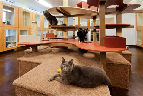 design works home is where the cat is the ultimate cat habitat animal arts