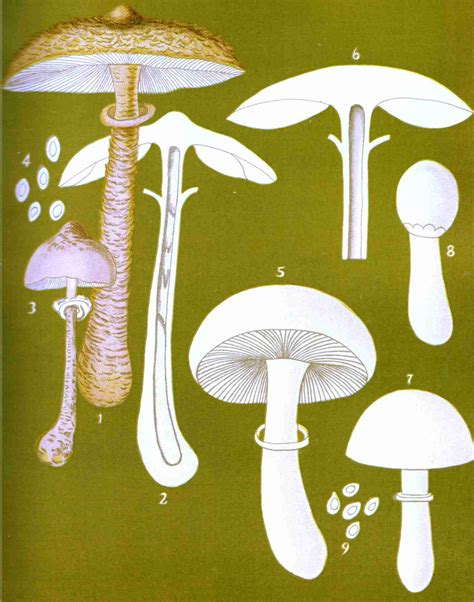 student s book of mushrooms of america edible and poisonous classic reprint books the project gutenberg ebook of student s book of