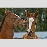 Images Of Baby Horses Running   400 x 266 jpeg 35kB
