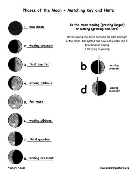 Moon Phases Worksheet Answers by Phases Of The Moon Quiz Worksheet