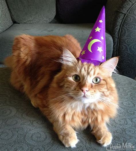wizard cat wizard hat for cats archie mcphee co