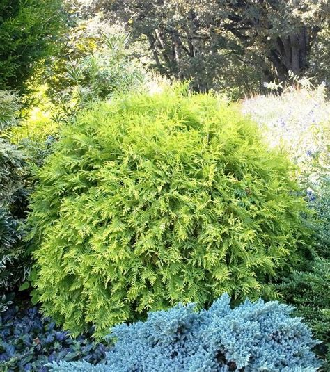 green foliage plants for sun 43 best images about landscaping ideas on sun