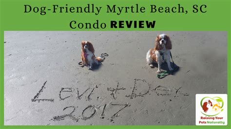 myrtle puppies friendly myrtle vacations myrtle friendly condo review