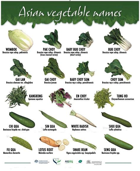 vegetables japanese asian vegetable names pic from https www