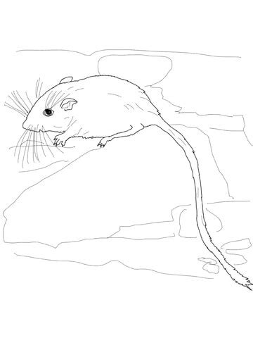 desert pocket mouse coloring page supercoloringcom
