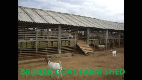 goat housing design goat farm layout design modern house