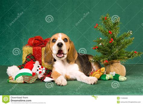 beagle clipart christmas pencil and in color beagle