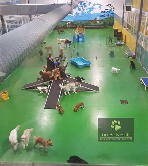 the dog house doggie daycare 25 best ideas about dog hotel on pinterest dog boarding hotels that take dogs and