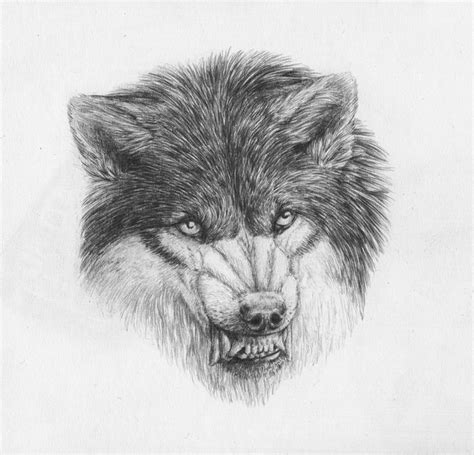 pencil snarling wolf by blackmaid on deviantart