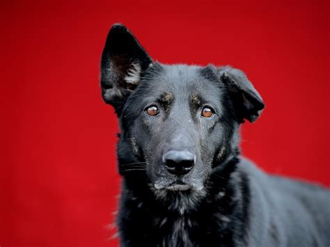 bela this world we livin 14 best adoptable baldwin park dogs images on