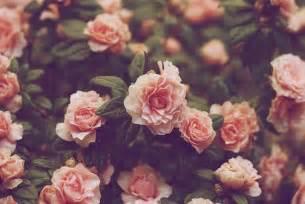 Love Is Blind Quotes Vintage Flower Wallpaper Qygjxz