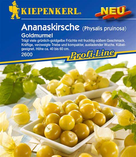 Reifen Physalis Nach 5675 by Physalis Pruinosa Goldmurmel Weitere Gem 252 Sesamen Bei