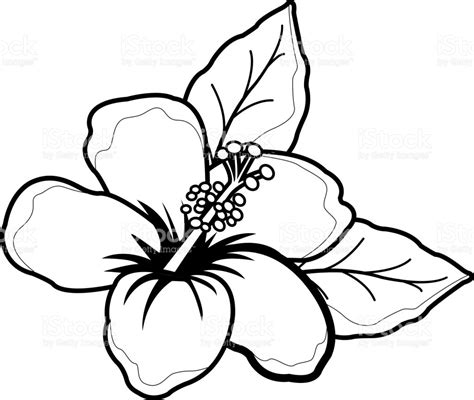 black and white coloring pages of flowers tropical coloring pages stork 1 coloring page coloringcrew