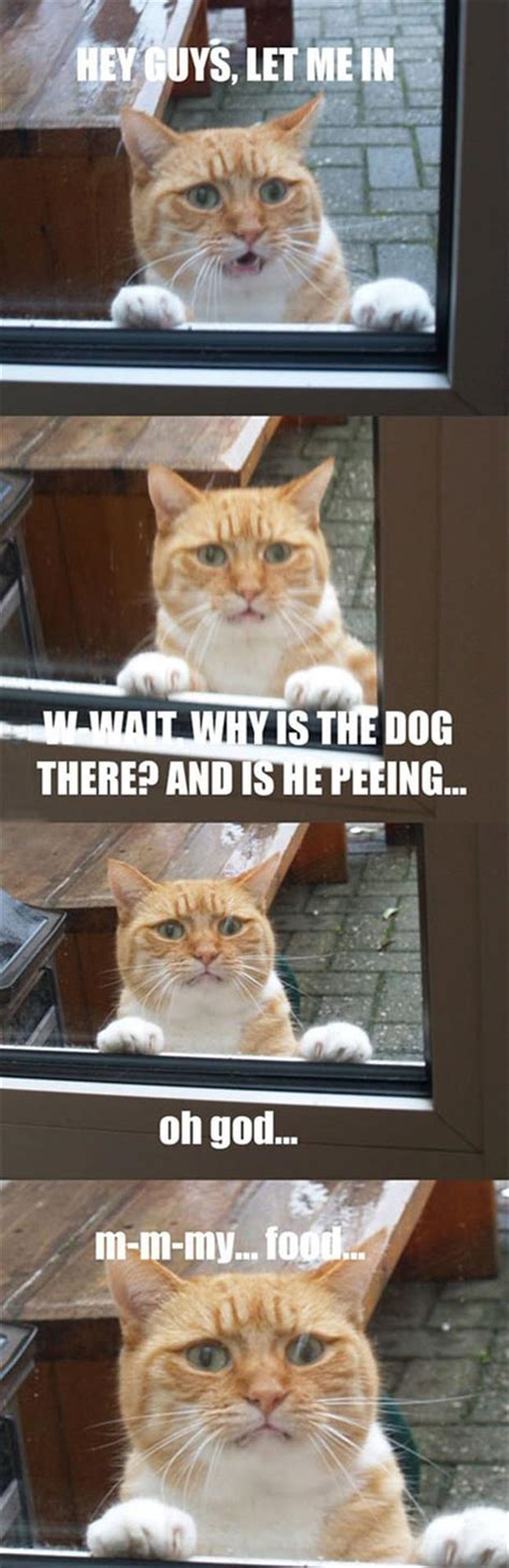 why does my dog randomly pee in the house dog is peeing on the cat food funny cat pictures dump a day