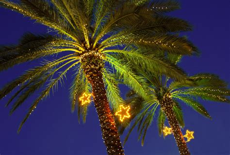 images of palm trees decorated for christmas merry sounds of hawaii 171 the yule log 365