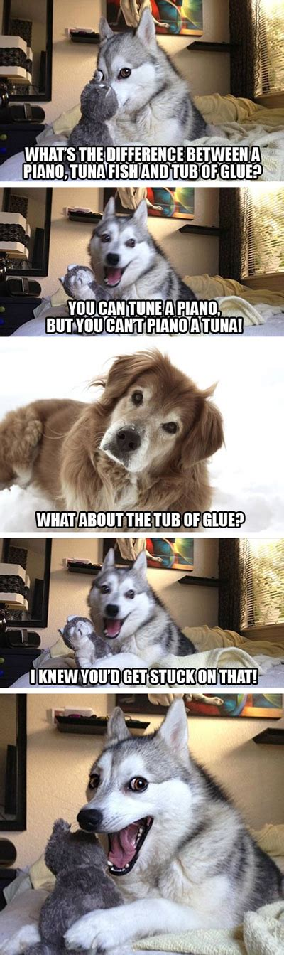 pun husky meme jokes  insanely cute dose  funny