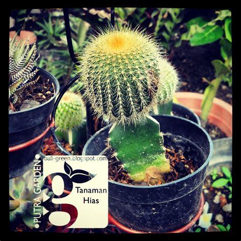 Tanaman Cactus tanaman kaktus mini cactus house plants by gmanick on deviantart