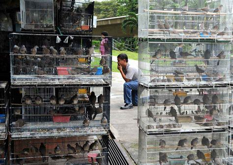 ava to take action against 15 bird shops singapore news