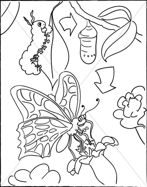 caterpillar butterfly coloring page pretmic com caterpillar with cocoon and butterfly childrens church