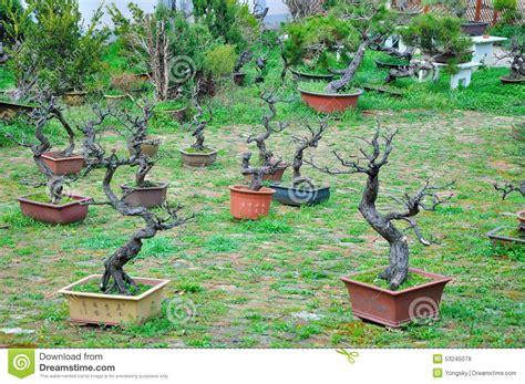 garten bonsai bonsai garten redaktionelles stockbild bild park