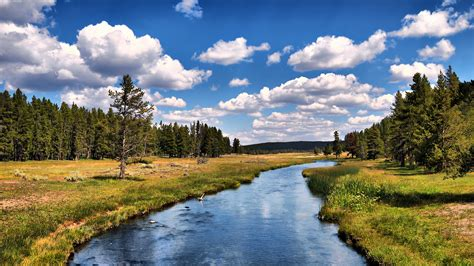 yellowstone national park wallpapers hd wallpapers id wallpaper forest river clouds usa grizzly river