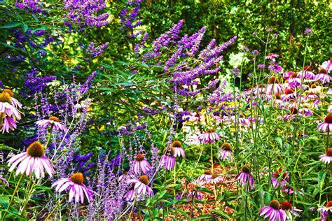 fiori e colori fiori e colori enfanteterrible 2303263