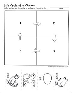 Cycle Of A Chicken Worksheet by Cycle Worksheets For Preschools