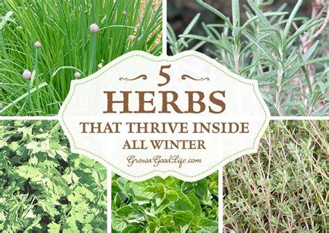 grow herbs indoors  herbs  thrive