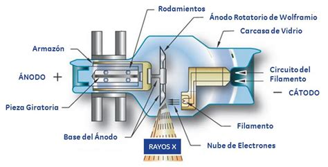 rayos x rayos x related keywords rayos x keywords