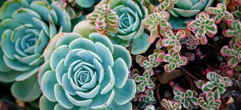 plants that don t need water hardy plants that don t need much water and they re