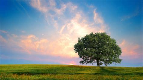 lone tree nature 4k wallpaper free 4k wallpaper