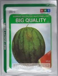 Harga Bibit Buah Semangka semangka hybrid tanpa biji quot big quality quot bibit unggul