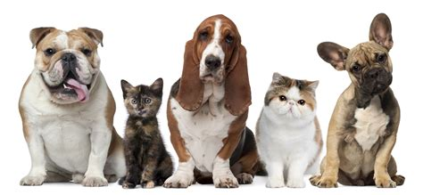 cats dogs dogs and cats living together 4 cool wallpaper funnypicture org