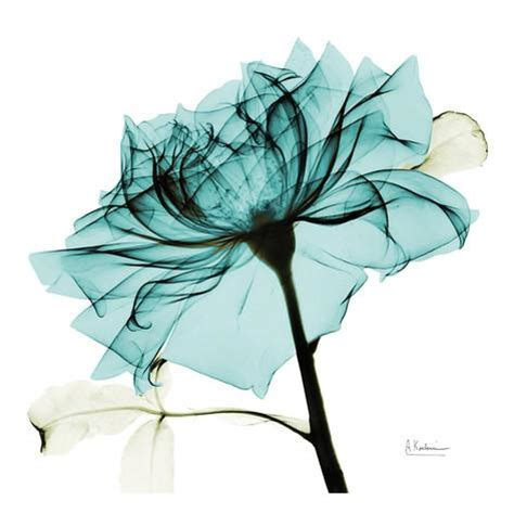 albert koetsier teal rose 2 prints by albert koetsier at allposters com