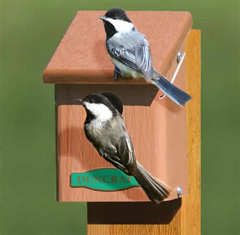 duncraft com eco chickadee bird house