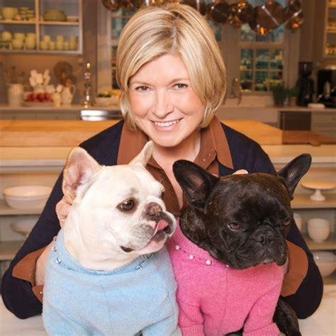 stewarts dogs martha stewart s pet project modern magazine