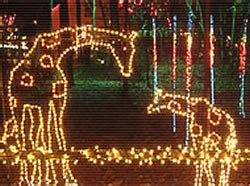 Greenville Com News Lights Before Christmas Only Place In Lights Before Riverbanks Zoo