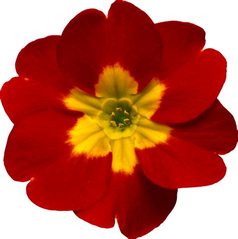 imagenes en png de flores marcos gratis para fotos flores png ramos etc renders