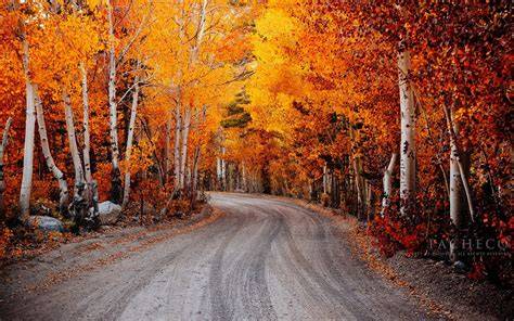 autumn fall landscape nature tree forest leaf leaves road