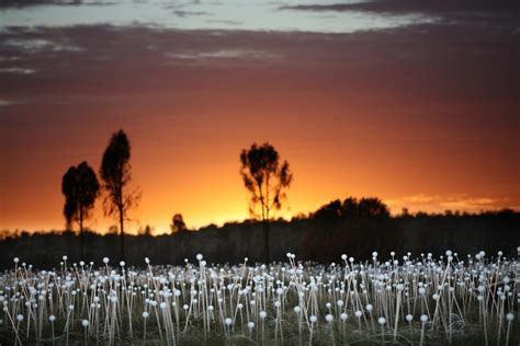 bruce munro field of light spectacular field of light installation comes to uluru