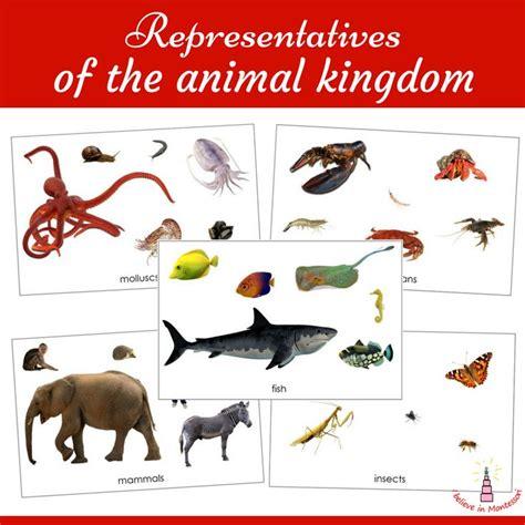 printable animal groups 146 best i believe in montessori blog and montessori