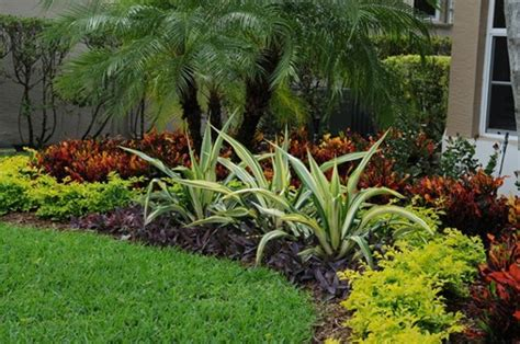 Summer Landscaping And Gardening Tips For South Florida Florida Landscape Plants