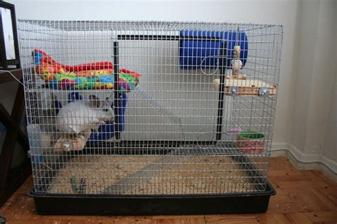 Cheap Outdoor Kitchen Ideas chinchillas as pets cages for pet chinchillas