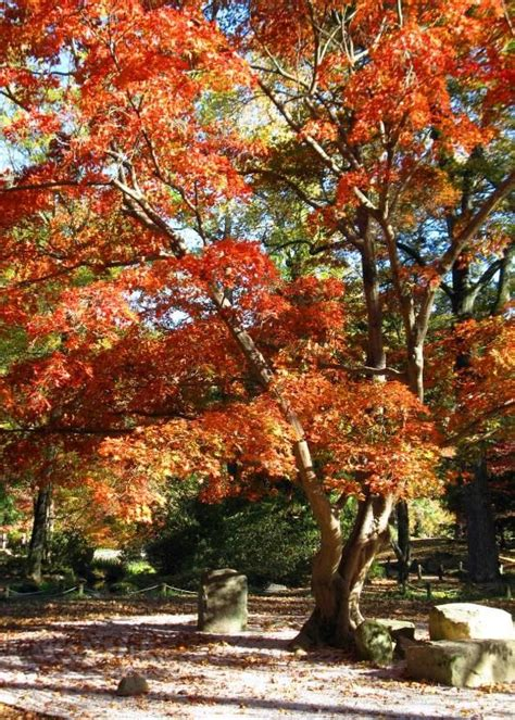 fall garden virginia 15 best images about travel on virginia