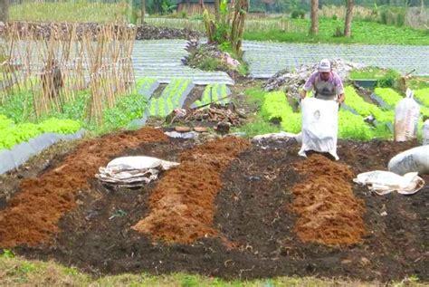 Bibit Sengon Bogor jual pupuk kandang di bogor jual bibit tanaman unggul