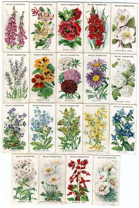 names  pictures  traditional english cottage garden